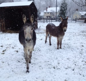 The boys venture out of their shed to play in snow
